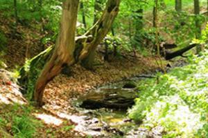 Natur erleben im Everstorfer Forst
